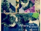 求可靠的爱猫人士