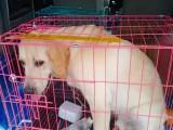 温州全国宠物托运 免费接送 专人护理