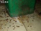 专业灭臭虫,蟑螂,老鼠