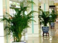 武汉曼殊园艺,办公室绿植租赁与养护,室内外植物租摆