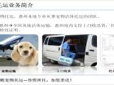 惠州飞鹅宠物托运 可靠,方便,快捷