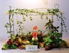 在南京有插花培训周末班吗