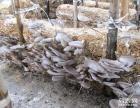 武汉哪有食用菌种植技术培训食用菌种植前景怎么样