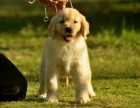郑州本地出售世界各类名犬 支持上门看狗加微信有折扣