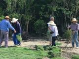 杭州绿化养护 草坪修剪 庭院清理 园林景观设计施工春版园艺