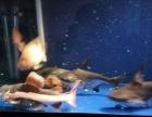 出售两条汗鲨 赠送两条鹦鹉 因鱼太多
