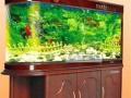 郑州搬鱼缸清洗鱼缸包养鱼鱼缸定做定制鱼缸