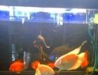 热带鱼打包处理