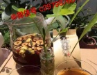 又木黑糖红枣姜茶加盟 健康养生 投资小市场大收入高