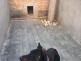 京广桥长期有偿寄养 单独房间散养养老宠物 托管 接送寄养