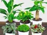 陵水招財貓綠植租售公司 專業從事各種場合的綠植租擺和銷售