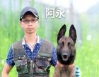 宠物训练 工作犬护卫犬训练
