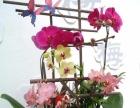 学插花 开花店找萨瓦迪卡插花培训 带你走进花艺界