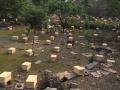 湖南长沙贵州贵阳江西南昌出售中华蜜蜂蜂群蜂种蜂箱自产土蜂蜜