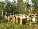 蜂蜜特点和功效,怀化蜂窝窝天然枣花蜜,新晃晴方蜂业合作社