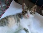 杭州市橘猫宠物猫多少钱一只