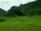 清远市120亩优质耕地