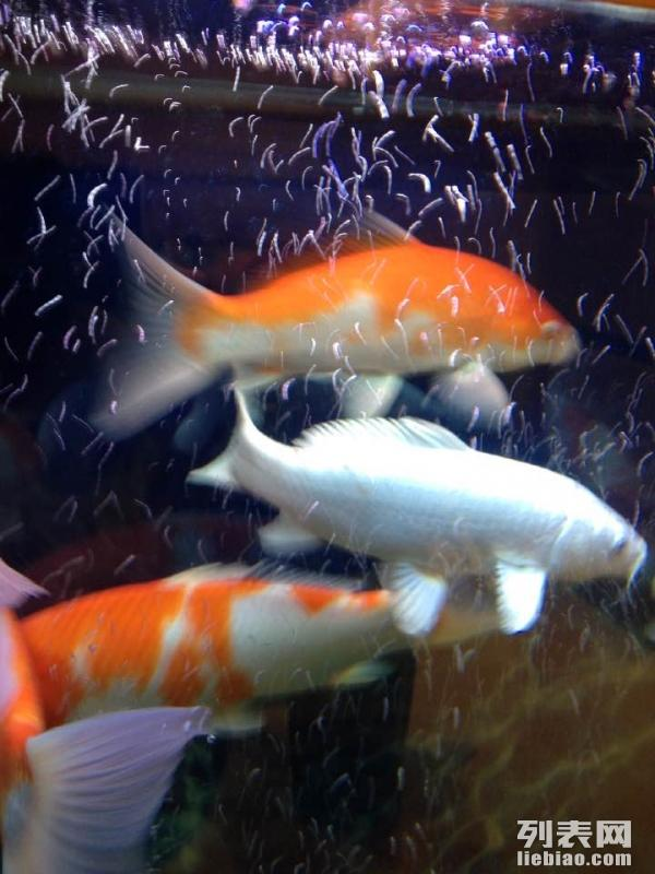 全昆明鱼缸 鱼池清洗 鱼缸维修