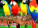 鹦鹉出售,购买鹦鹉,鹦鹉养殖场,哪里有购买各种大型金刚鹦鹉