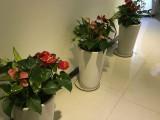 绿植租摆办公室盆栽租售免费设计方案来电即优惠
