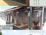 貴陽寵物養殖基地直銷世界各類名犬 寵物狗 現場挑選 送貨到家