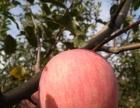 山西红富士苹果,健康水果,45元10斤包邮