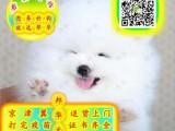 球体博美幼犬 视频看狗 可送货上门 签协议保健康
