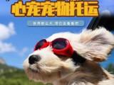 广州太原西安至全国猫狗宠物托运服务