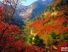 仙台山红叶红了吗红叶好看吗 仙台山赏红叶一日游