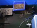 宠物寄养犬猫寄养兔子 松鼠 龙猫 荷兰猪 乌龟等寄