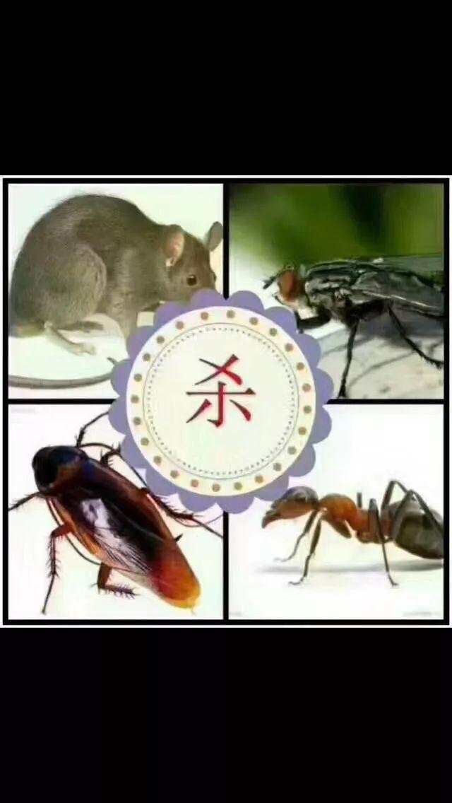 专业优质.除虫除蚁.白蚁防治.四害消杀