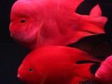 观赏鱼出售专业清洗鱼缸换水消毒滤材