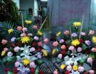 承接·开业庆典花篮,结婚花车,生日花束及各种盆栽鱼鸟