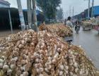 近期山东大蒜价格有上涨趋势