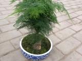 室内小植物批发