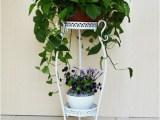 歐式鐵藝花架 多層綠蘿 吊蘭落地花盆架 陽臺客廳室內花盆架