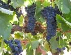 澳威葡萄酒产于澳洲,葡萄酒品牌系列享有一定口碑!