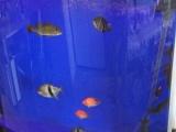 可丽爱鱼缸出售