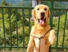 训狗、训犬、宠物犬训练,可远程指导