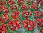 北京密云草莓采摘園