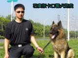周口训犬师学校学习在哪里宠物老师培训基地在哪