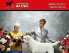 万户犬舍代客户出售一对纯血统拉布拉多