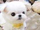 北京最大宠物养殖基地常年出售各种精品宠物幼犬
