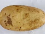 供应 散装皮薄个大农家自产新鲜蔬菜马铃薯