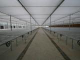 山东养殖大棚供应|连栋育苗温室建设