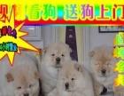 专业松狮狗场——微信看狗 随时可送货上门种公配种