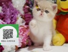 大连哪里卖加菲猫 加菲猫价格 加菲猫哪里有卖