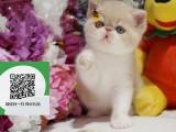 徐州哪里卖加菲猫 加菲猫价格 加菲猫哪里有卖