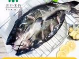 开背鮰鱼 安徽巢三珍厂家批发直销烤鱼食材