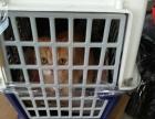 台州宠物空运宠物托运